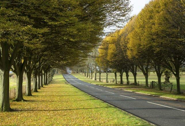 Wedgwood Drive