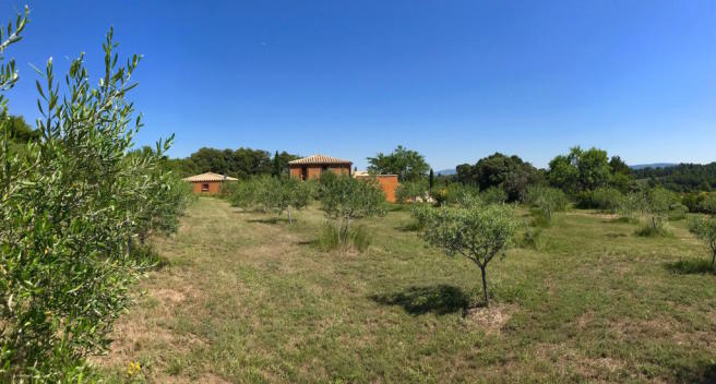 Olive grove Carcasso