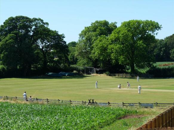 Cricket Pitch 4