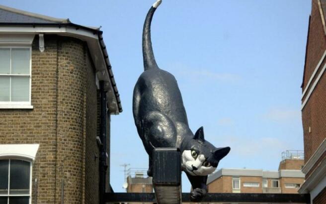 Famous Cat