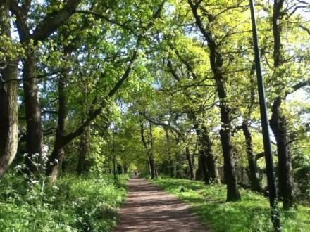 Sydenham Hill Woods