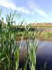 Estate ponds