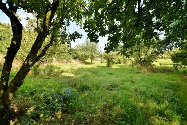 Field (3).jpg