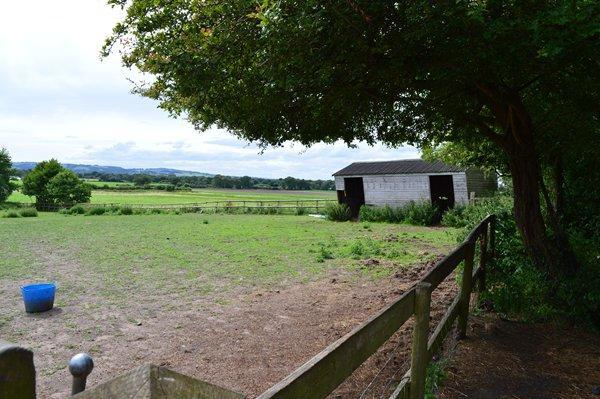 paddock and shelter