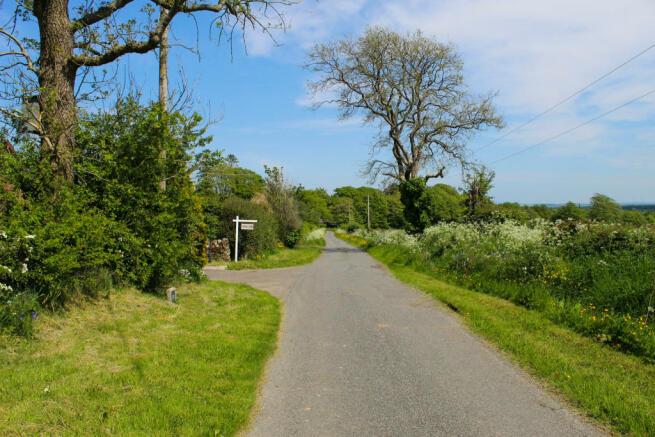 Foxgloves, Cadgillside Farm, Chapelknowe, Canonbie