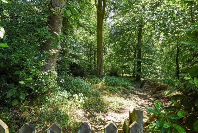 View into woods from side gate