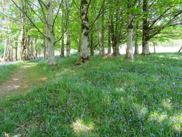 The woodland.jpg