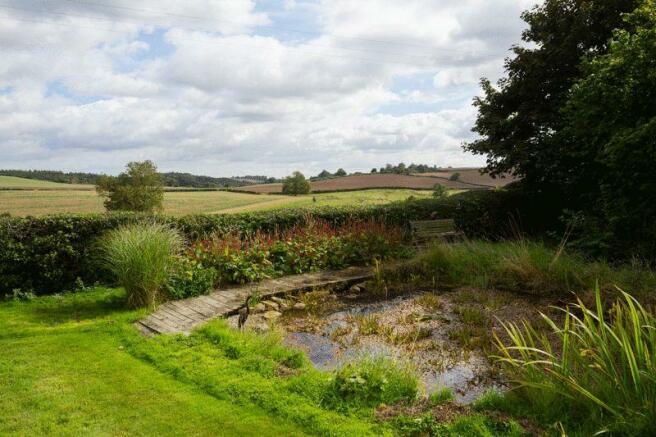 Wildlife pond ...