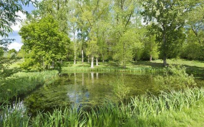 Pond/Woodland