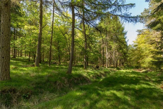 Barr Wood