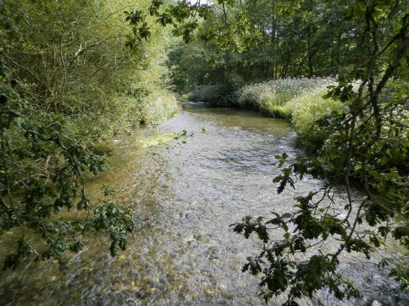 River Cych Run...