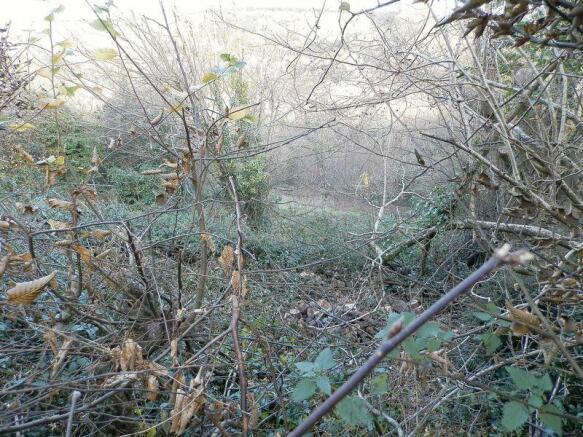 Overgrown Land