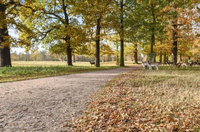 Bushy Park