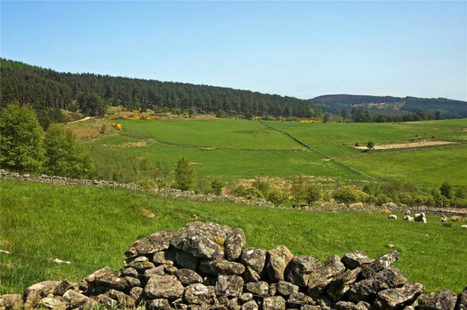 Whitehills