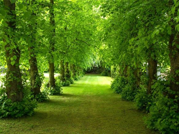 Avenue Of Lime Trees