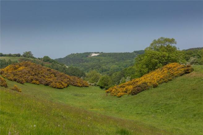 White Horse View