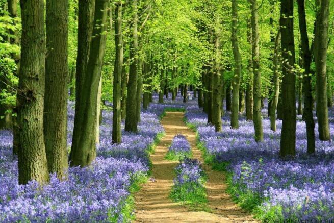 badby woods.jpg
