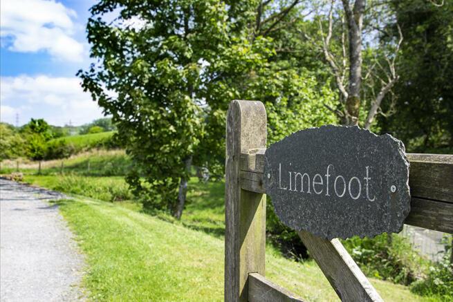 Limefoot