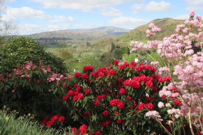 Rhododendrons in ...