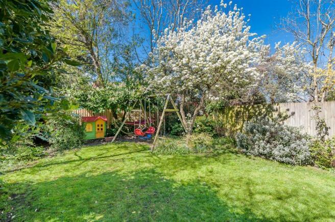 garden pear tree.jpg