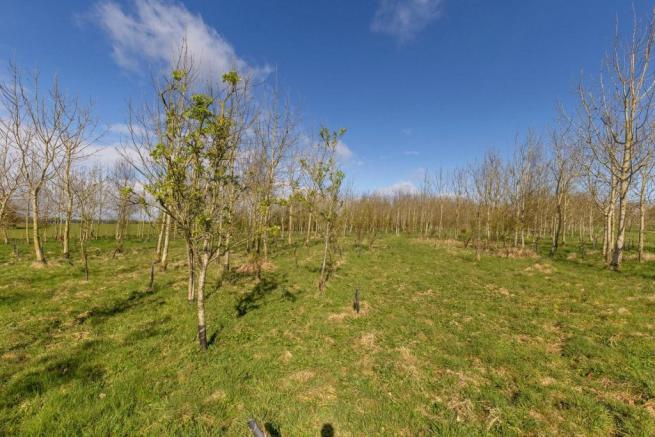 Lot 1 Woodland