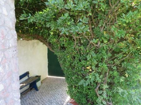 Image 29, 3 Bedroomed Villa : AV1778