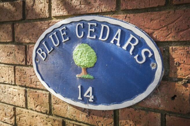 Blue Cedars