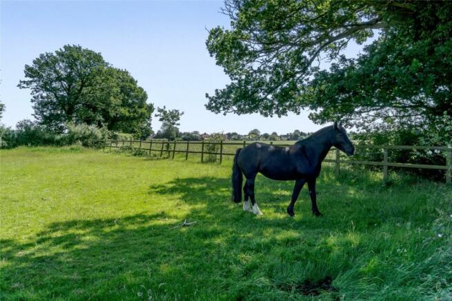 Paddock & Horse