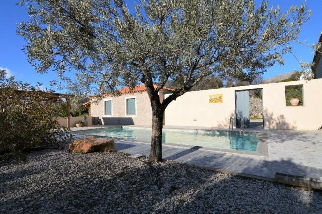 Olive Tree & Pool