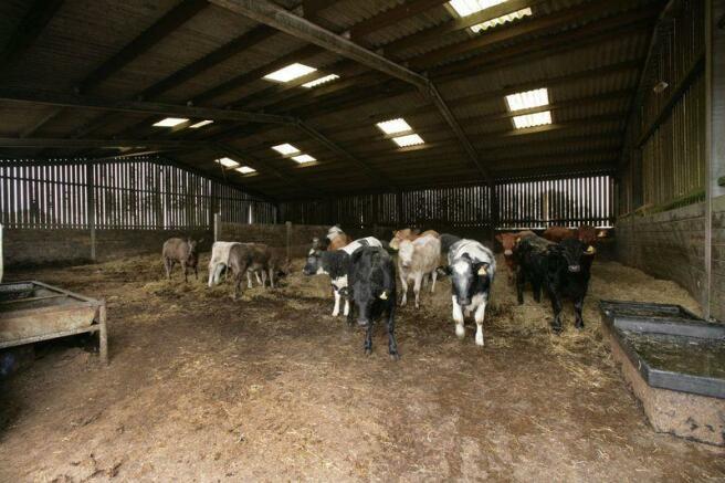 Building - Cattle