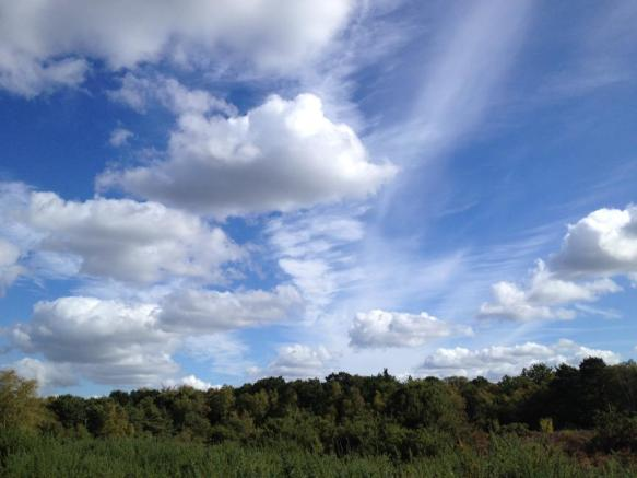 Sheets Heath Common