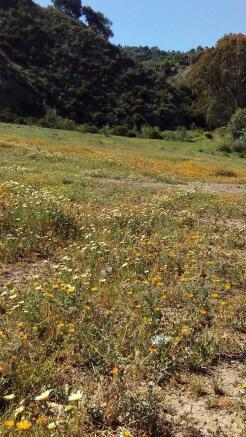 wild flowers nearby