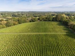 Photo of Privately Available Vineyard, Lewes
