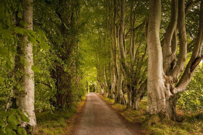 Kemnay countryside