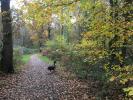 Woodland Walk to Gull Coppice