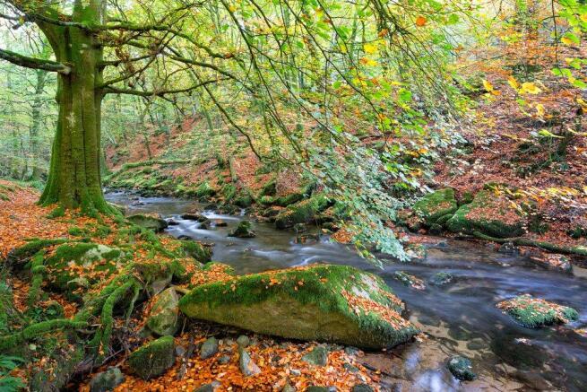 Stream On Dartmoor