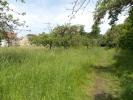 Wild Orchard Walk...