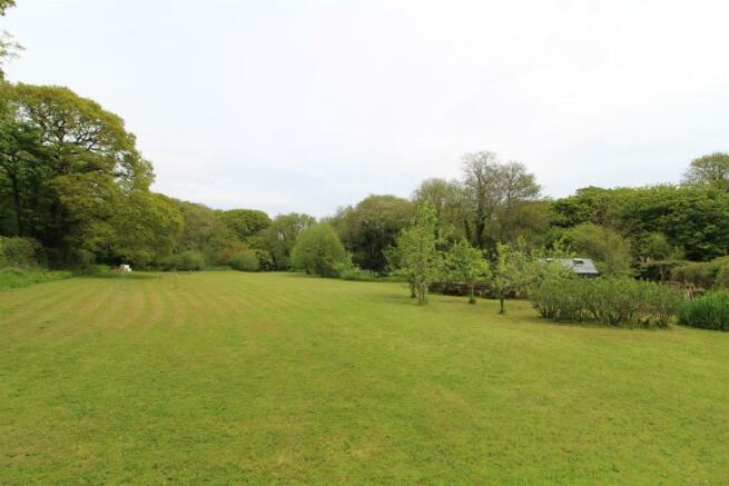 New meadow.jpg