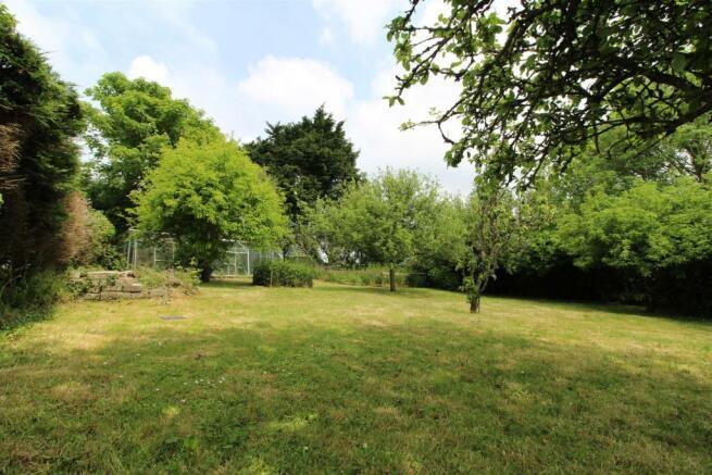 New orchard.jpg