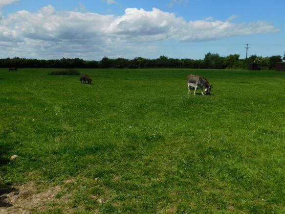 Animal Field 2