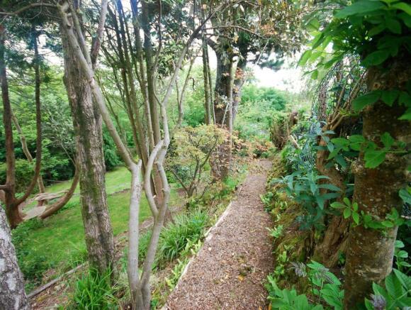 garden back 6.jpg