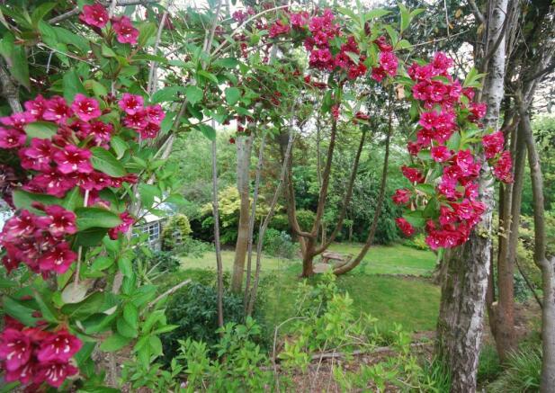 garden back7.jpg