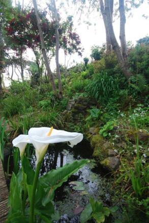 garden pond 4.jpg