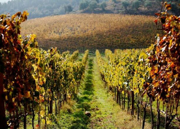 Siena Vineyard