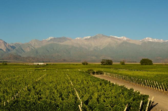 Argentina farmland investment forex teknik analiz kitap
