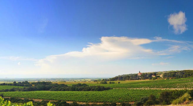 Panoramic view of Château Capitoul site across vineyards