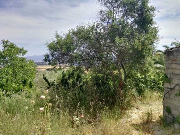 Land\Fruit trees