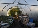 Polytunnel interior