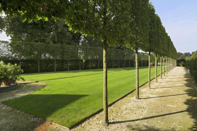 Pleached lime ...