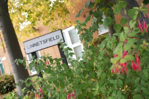 Linnetsfield